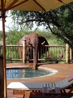 Etali Safari Lodge Madikwe